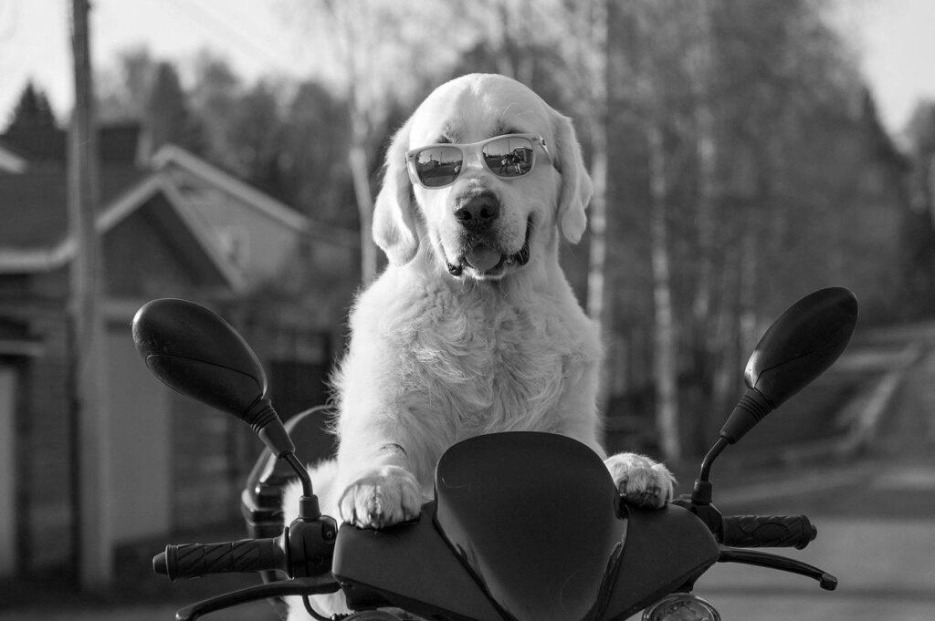 【教官ブログ】バイク免許でATはとるな!【MTにすべき3つの理由】